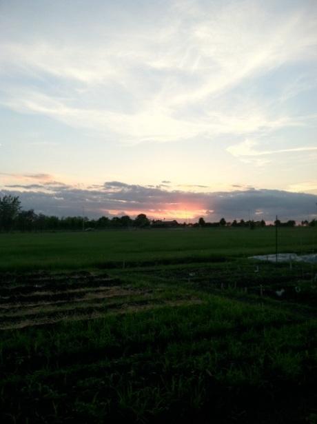 garden_sunset