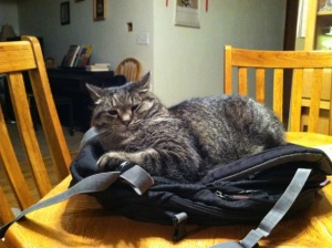 backpack_cat