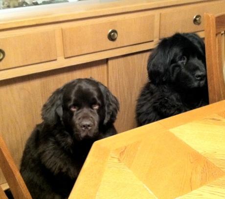 dogs_dinner